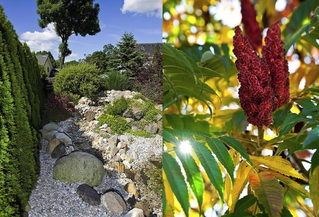 Gartengestaltung mit Naturstein - Gartenteich, Schwimmteich, Pool - Galeriebild