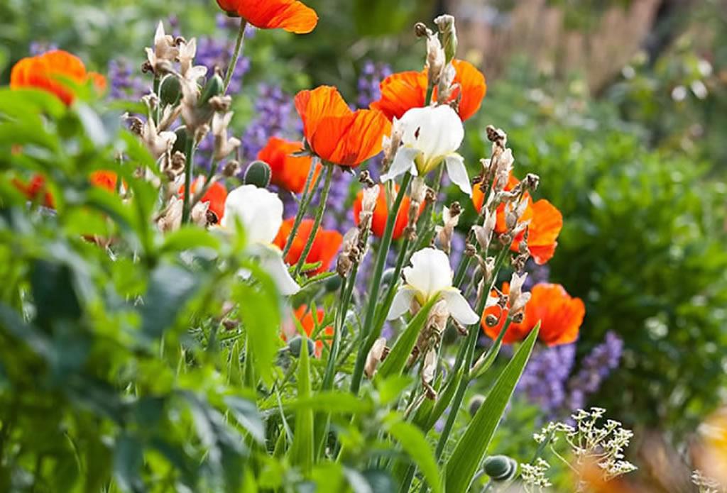 Blumenbilder, Gartenbilder - Landschaftsbau Gartenbau - Galeriebild