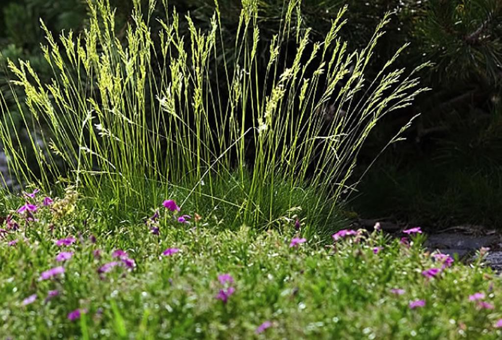 Ziergras - mediterraner Garten Galeriebild