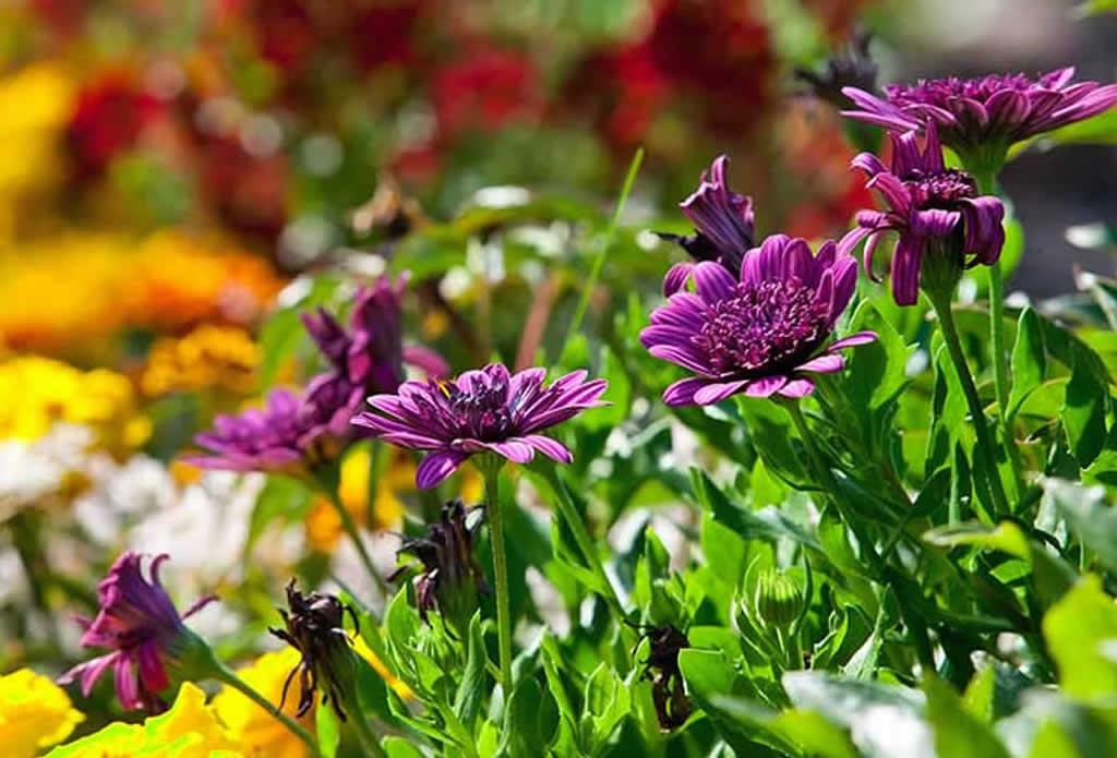 Mittagsblumen - moderne japanische Gärten - Galeriebild