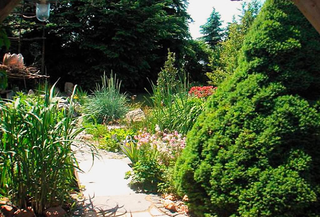 Taglilien und Zuckerhutfichte - moderne japanische Gärten - Galeriebild