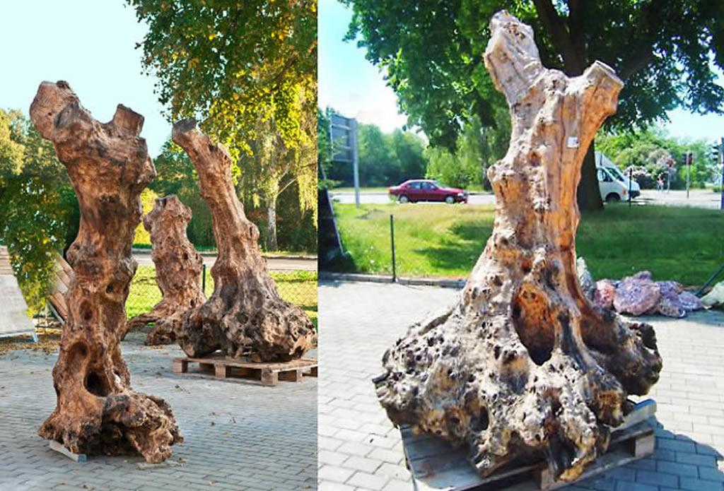 Holzskulpturen und Designermöbel aus Olivenbaum - Musterhaus Ausstellung Naturstein Garten - Galeriebild