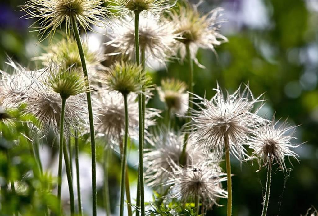 Geschenk für Gartenfreunde - naturnahe Gärten - Galeriebild