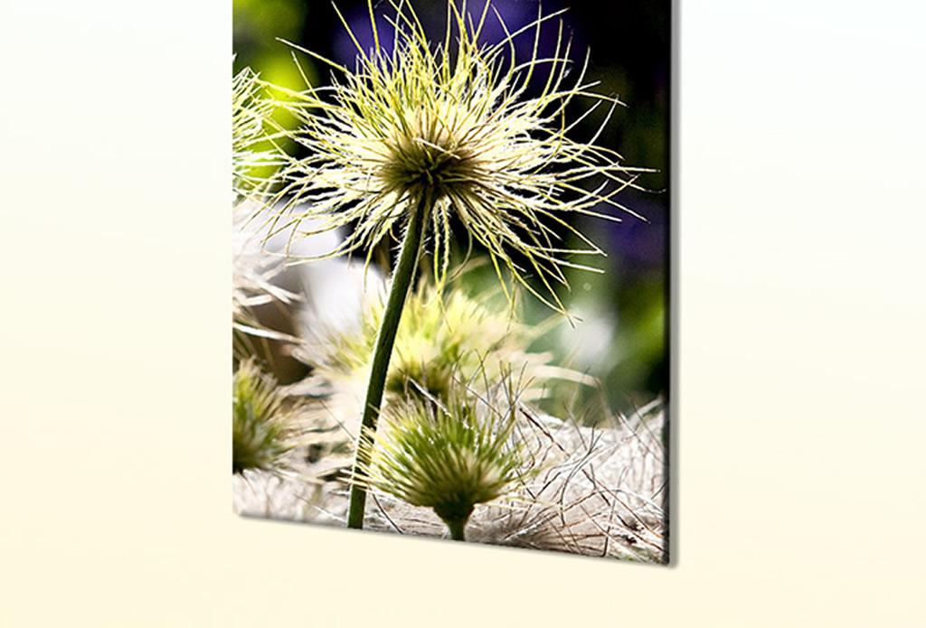 Gartenbilder, Blumenbilder - Olivenholz - Galeriebild