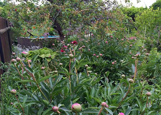 der natur auf der spur der naturgarten gartengestaltung mit naturstein leipzig krostitz. Black Bedroom Furniture Sets. Home Design Ideas