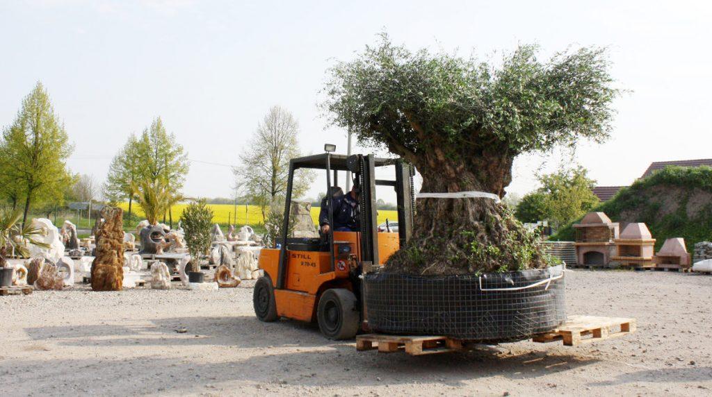 News archive gartengestaltung mit naturstein leipzig for Gartengestaltung olivenbaum