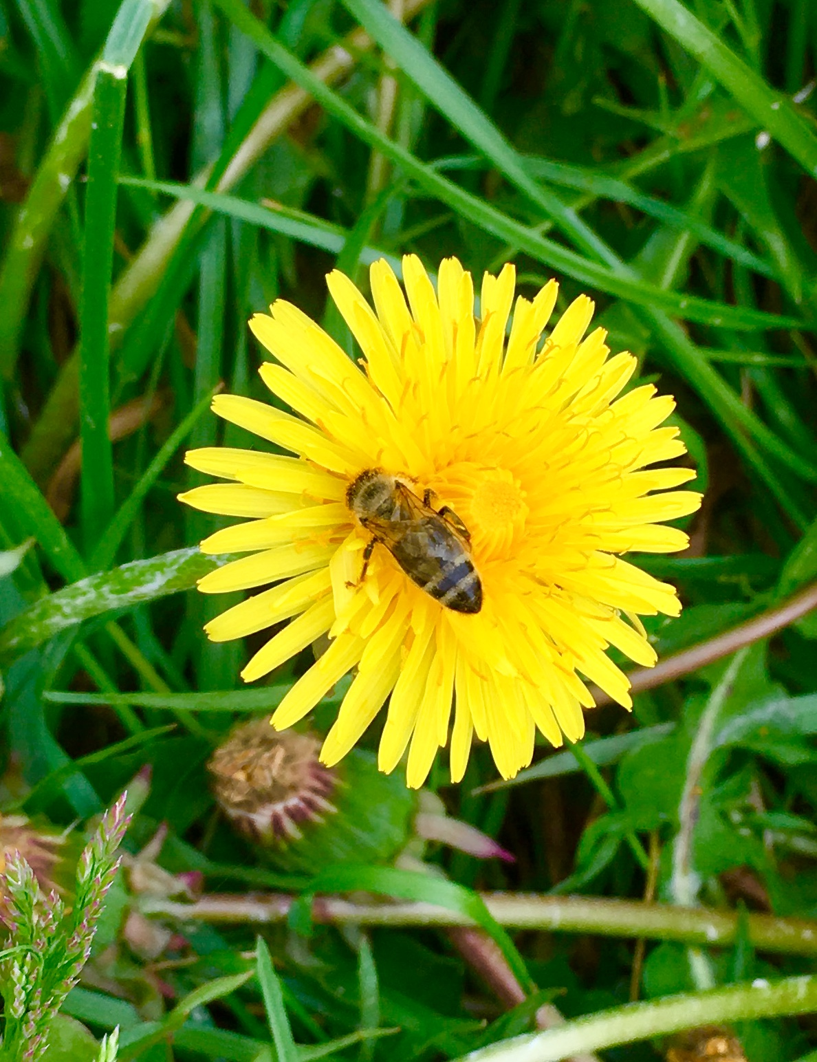 Augenweide Bienenweide Gartengestaltung mit Naturstein