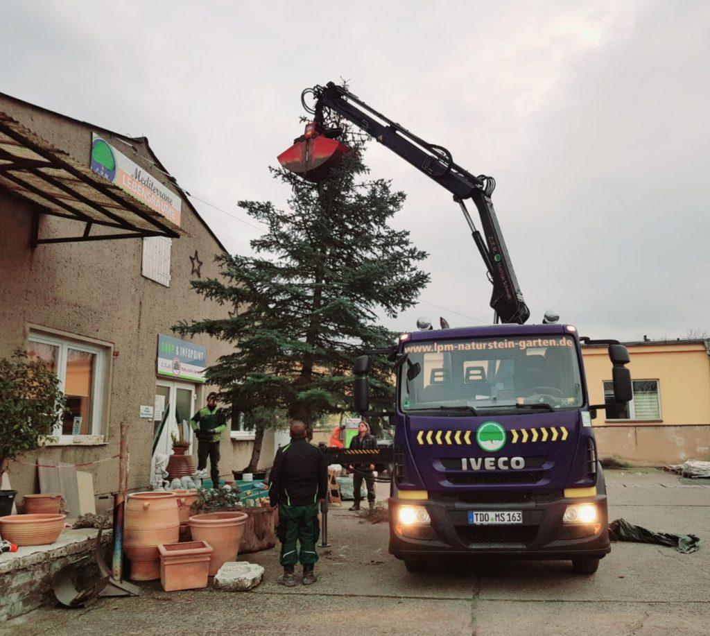 Weihnachtsbaumstellung auf unserem Schaulager in Krostitz