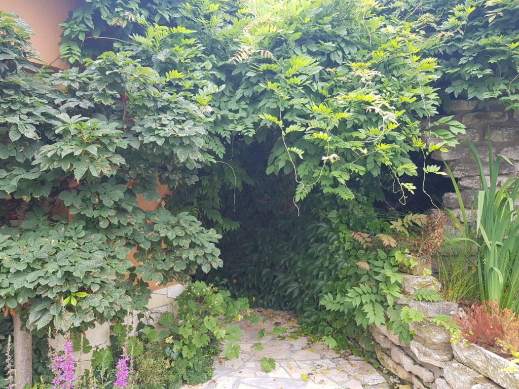 Dschungel im Garten