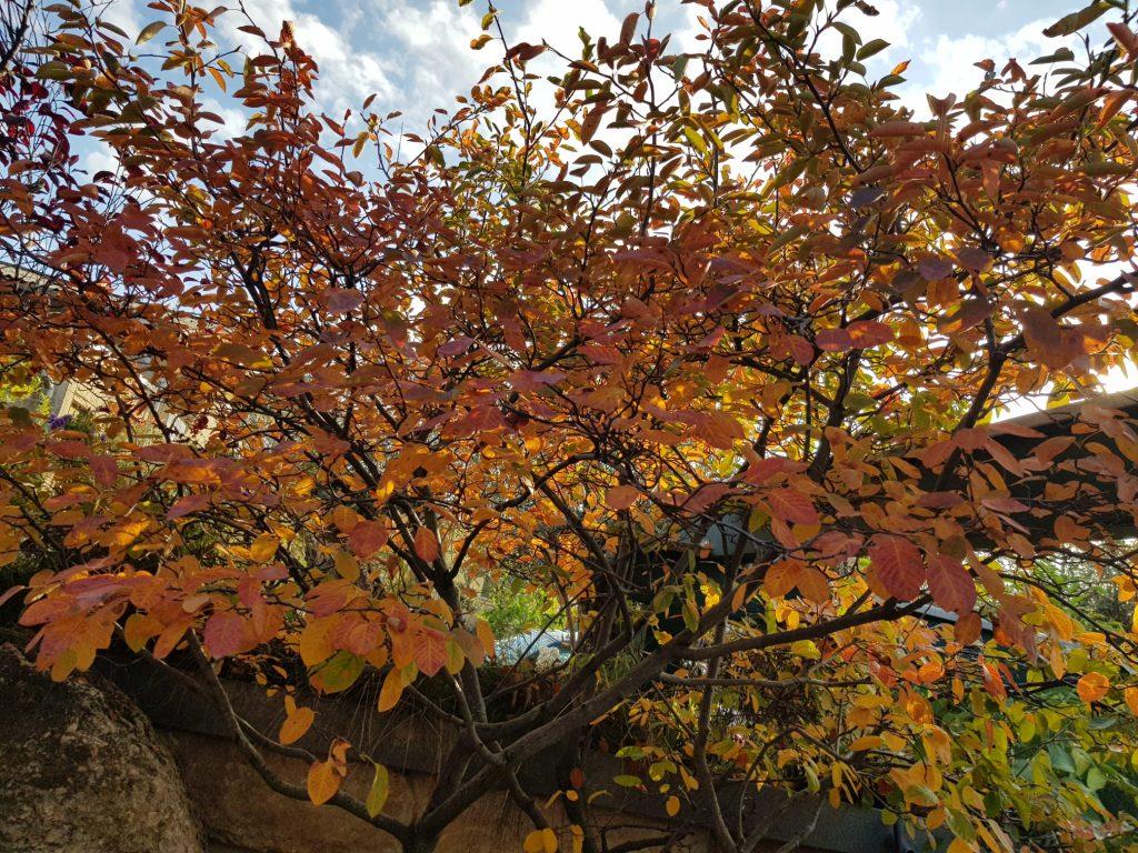 Bunte Blätter zur Herbstzeit